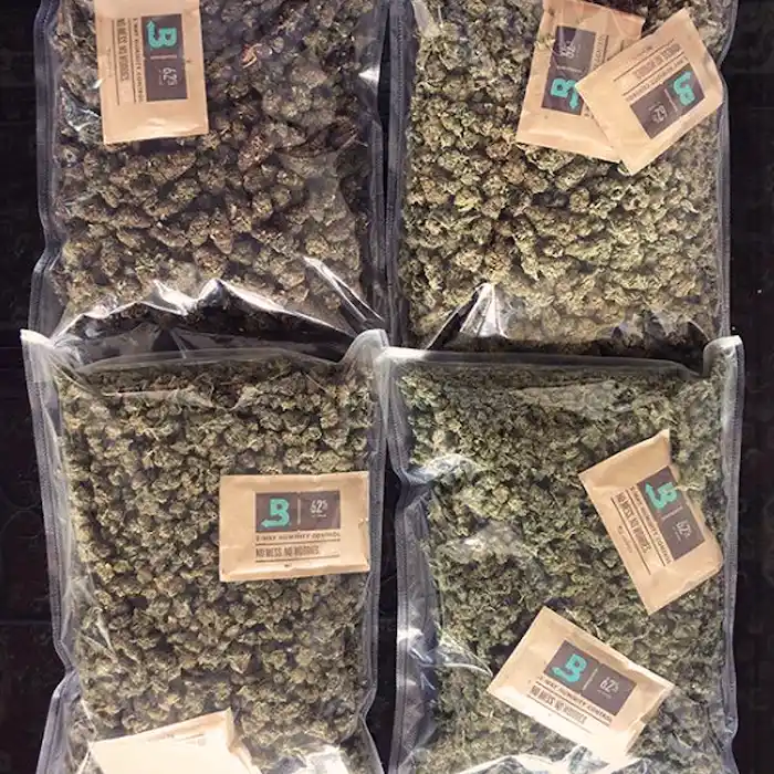 Four clear cannabis packs with humid packs from Boveda inside